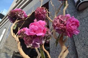 flowers-outside-luminous-beauty